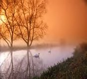 Swans on a stream at a hazy dawn